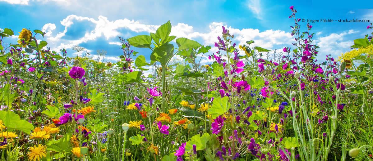 Bioterra Naturgarten: gestalten Natürlichkeit anlegen