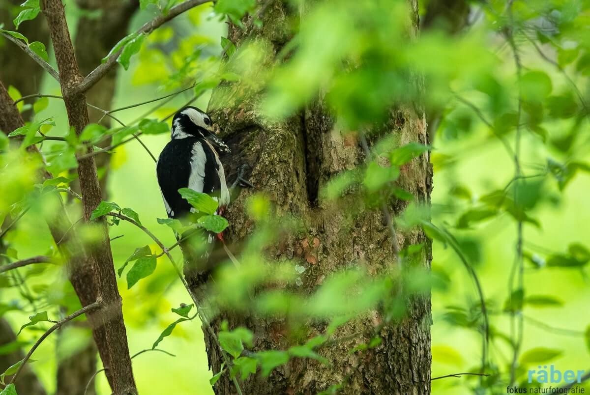 Gartengestaltung für einen kleinen Garten - Bedürfnisse der Vögel berücksichtigen
