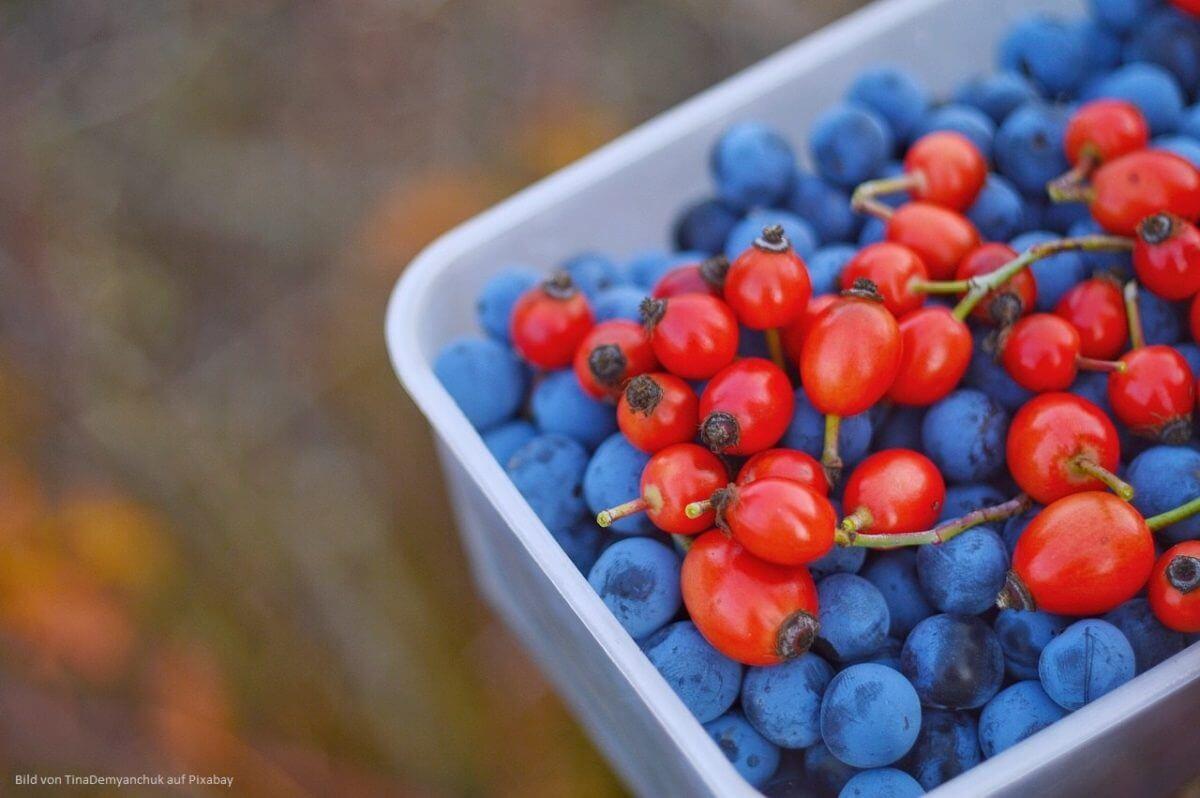 Hagebutte: Vitamin C, gesunde Ernährung