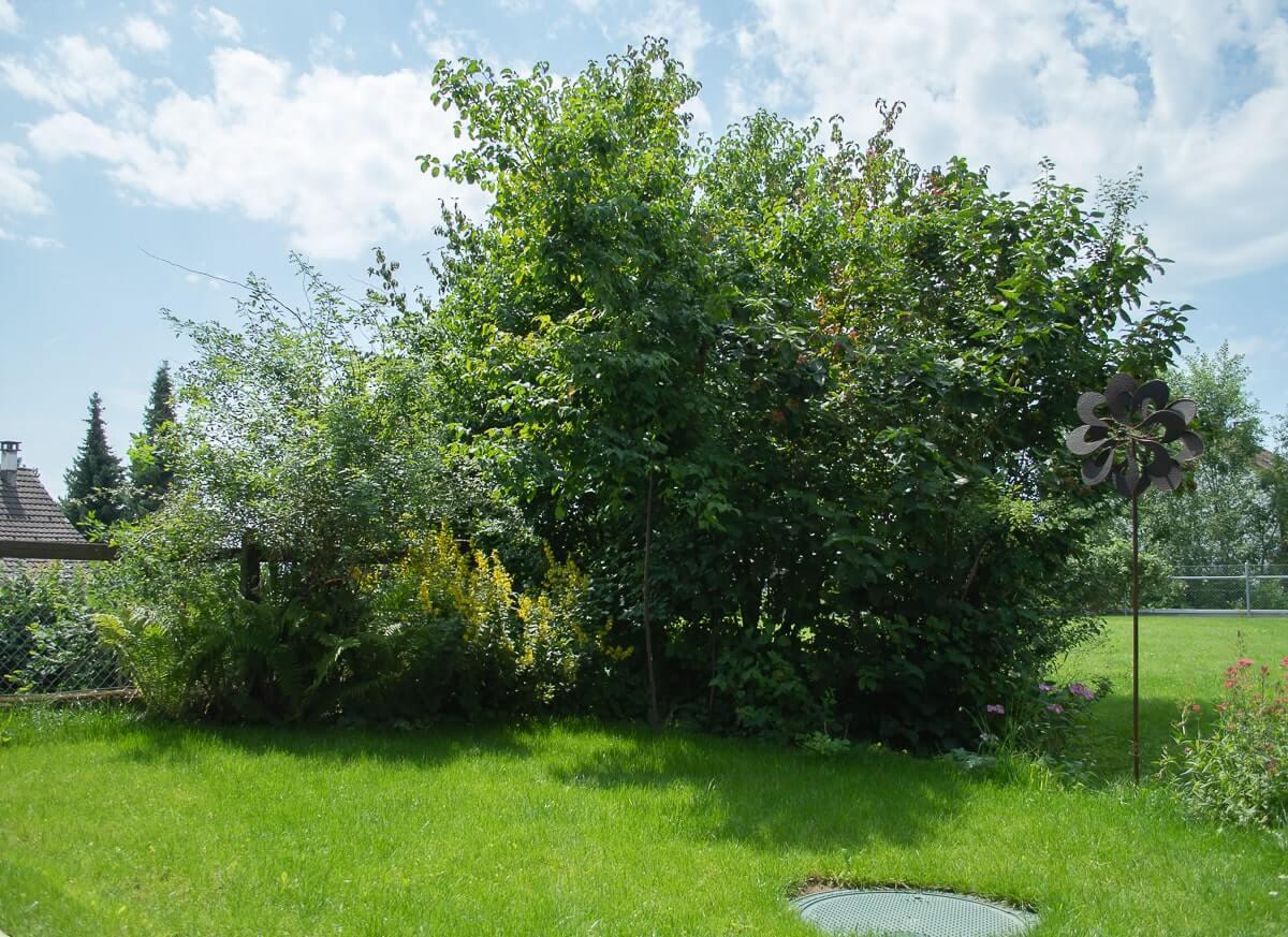 Lebensraum für verschiedene heimische Vögel – Kornelkirsche, Weissdorn, Hartriegel, Hagebutte etc.